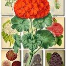 FLOWERS-36 66 vintage print