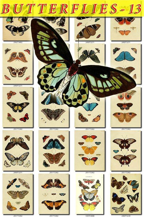BUTTERFLIES-13 202 vintage print