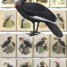 BIRDS-6 219 vintage print