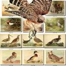 BIRDS-8 203 vintage print