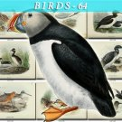 BIRDS-64 90 vintage print