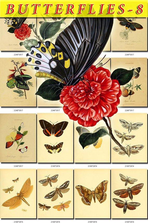 BUTTERFLIES-8 222 vintage print