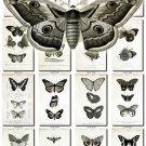 BUTTERFLIES-44-bw 97 black-, -white vintage print