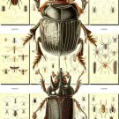 INSECTS-17 148 vintage print