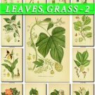 LEAVES GRASS-2 250 vintage print