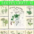 LEAVES GRASS-63 210 vintage print