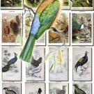BIRDS-122 58 vintage print