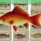 FISHES-36 64 vintage print