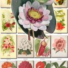 FLOWERS-52 92 vintage print