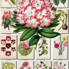FLOWERS-107 252 vintage print