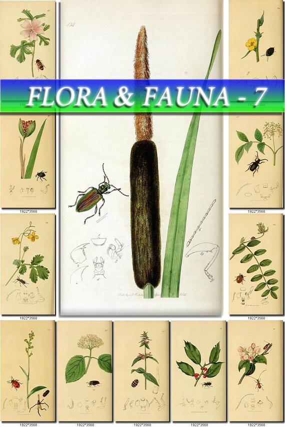 FLORA ,  FAUNA-7 198 vintage print