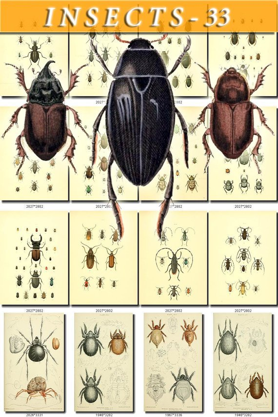 INSECTS-33 83 vintage print