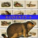 RODENTS-6 61 vintage print