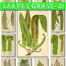 LEAVES GRASS-21 139 vintage print