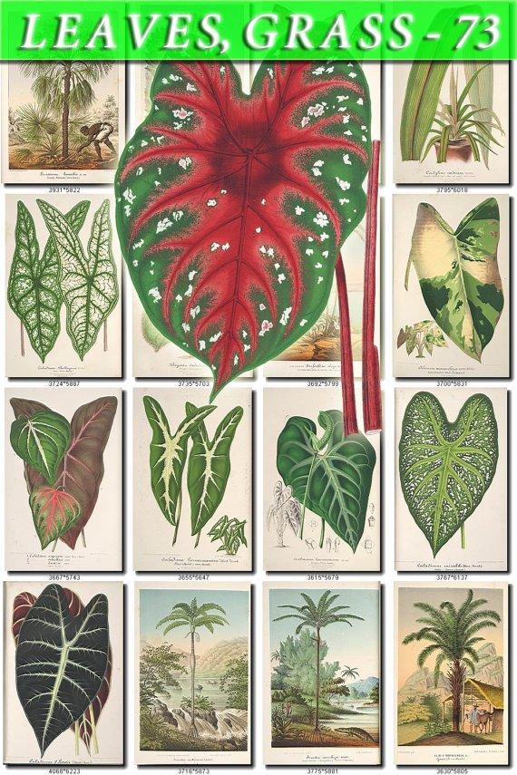 LEAVES GRASS-73 278 vintage print