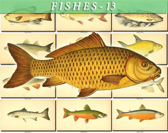 FISHES-13 105 vintage print