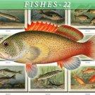 FISHES-22-b3 273 vintage print