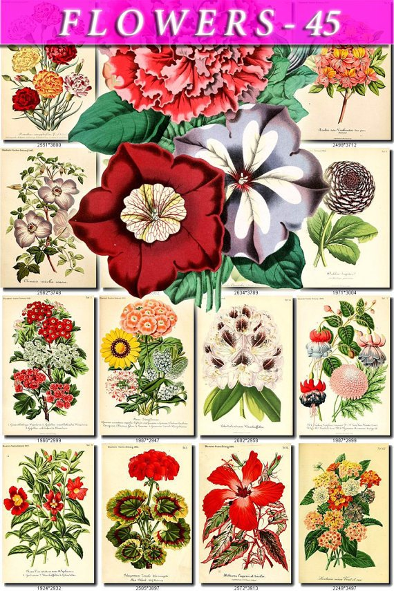 FLOWERS-45 62 vintage print