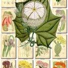 FLOWERS-82 240 vintage print