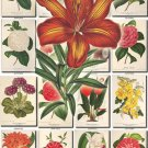 FLOWERS-111 206 vintage print