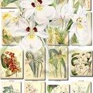 ORCHIDS-5 flowers 226 vintage print