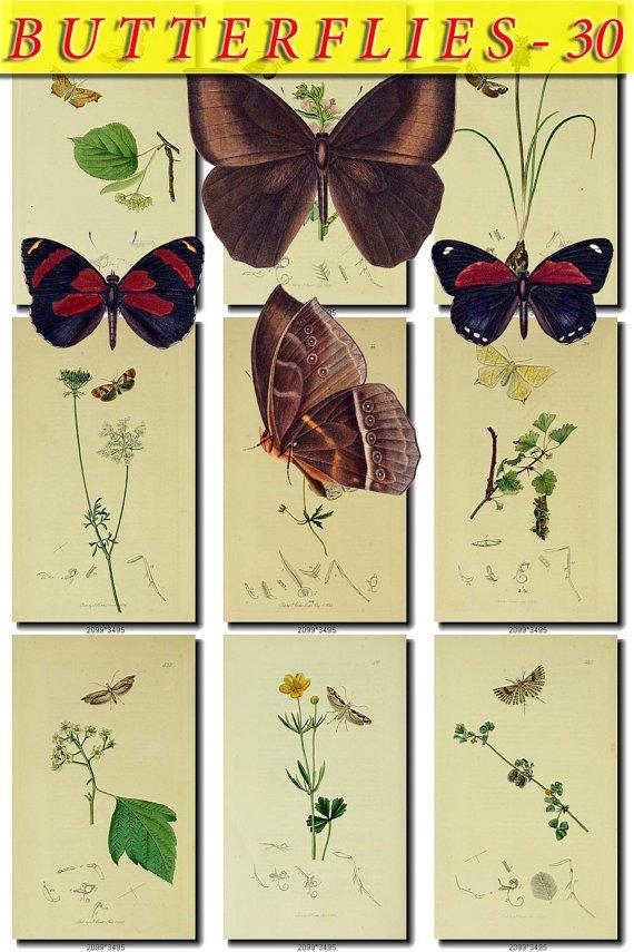 BUTTERFLIES-30 101 vintage print