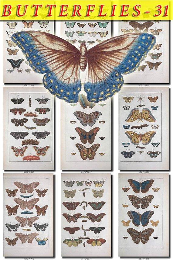 BUTTERFLIES-31 129 vintage print