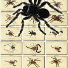 INSECTS-7 311 vintage print