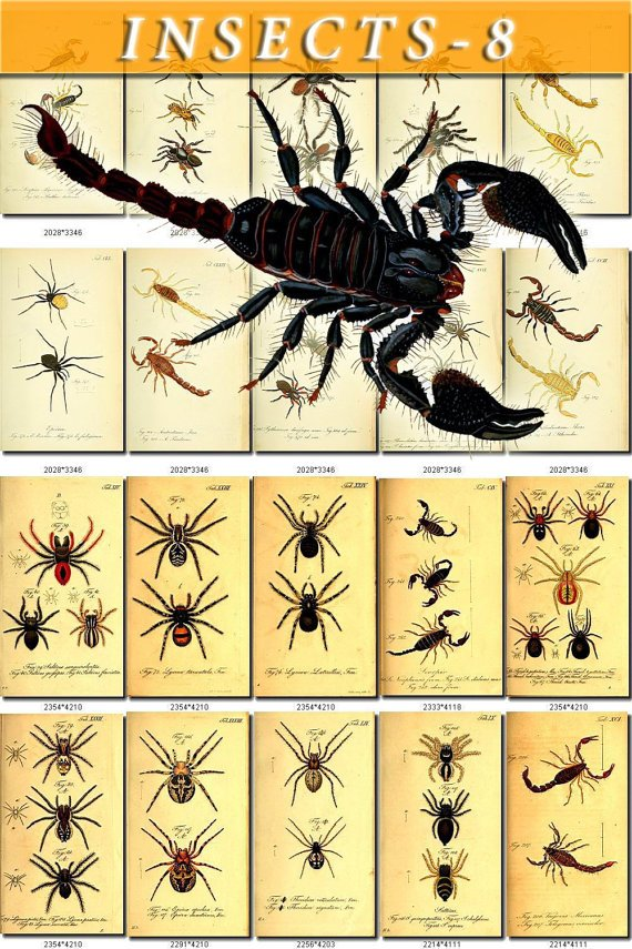 INSECTS-8 261 vintage print