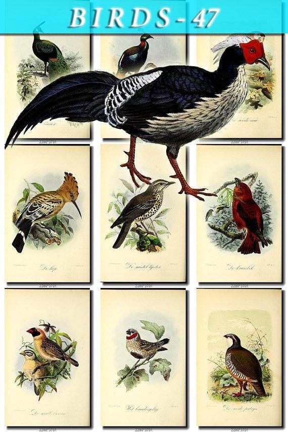 BIRDS-47 70 vintage print