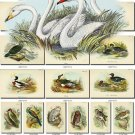 BIRDS-89 223 vintage print