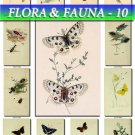 FLORA ,  FAUNA-10 201 vintage print