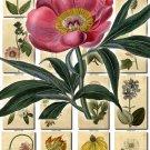 FLOWERS-11 251 vintage print