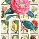 FLOWERS-75 265 vintage print