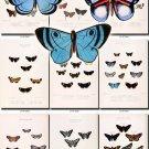 BUTTERFLIES-39 79 vintage print