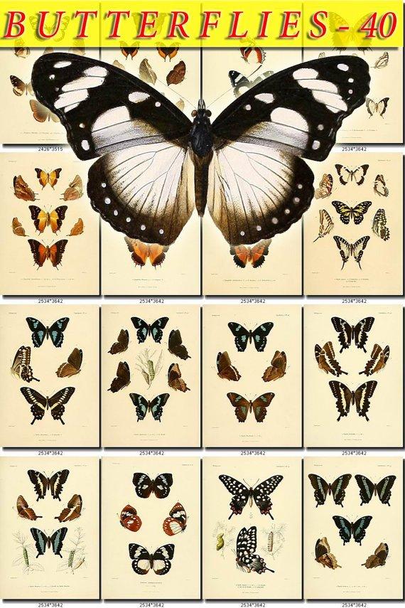 BUTTERFLIES-40 63 vintage print