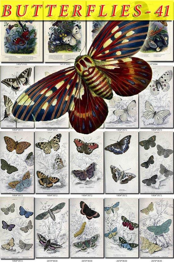 BUTTERFLIES-41 70 vintage print