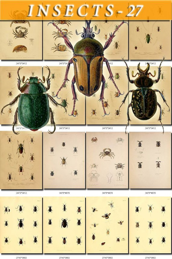 INSECTS-27 110 vintage print