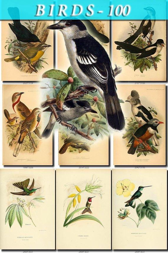 BIRDS-100 125 vintage print
