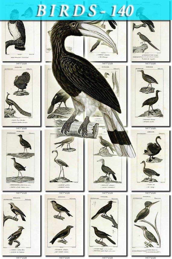 BIRDS-140-bw 154 black-, -white vintage print