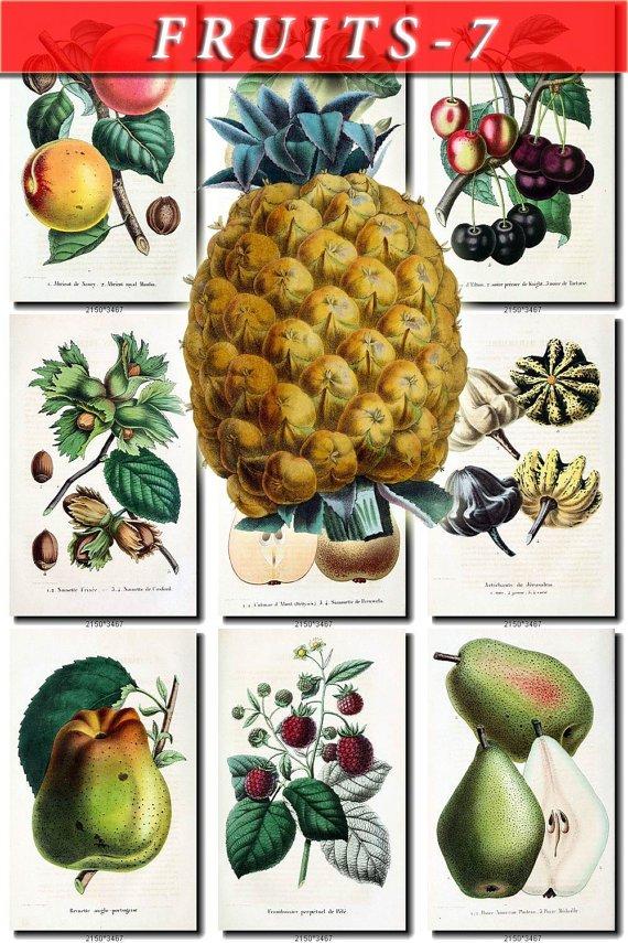 FRUITS VEGETABLES-7 66 vintage print