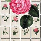 CAMELLIAS-2 flowers 100 vintage print