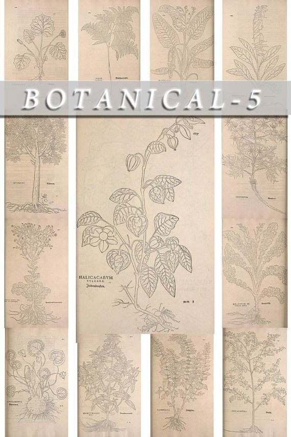 BOTANICAL-5-bw 509 black-, -white vintage print