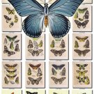 BUTTERFLIES-34 108 vintage print