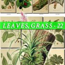 LEAVES GRASS-22 208 vintage print