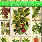 LEAVES GRASS-52 229 vintage print