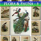 FLORA ,  FAUNA-3 227 vintage print