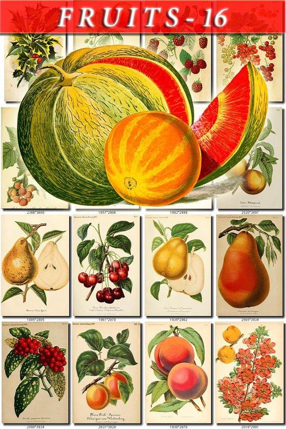 FRUITS VEGETABLES-16 52 vintage print