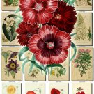 FLOWERS-29 66 vintage print