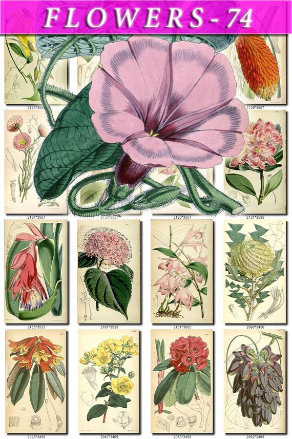 FLOWERS-74 200 vintage print